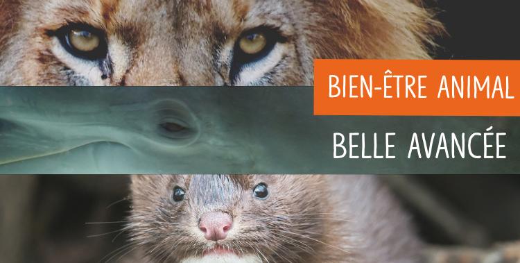 Un Référendum d'Initiative Partagée (RIP) sur la condition animale pour engager le débat dans la société
